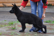 27_Puppies_Uragan_Avantura_SKALA