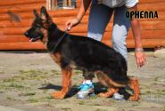 34_Puppies_Umaro_Kaora_ORNELLA