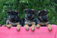 14_Puppies_Mac_Yuventa_FUAGRA_FUETE_FESKA