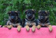 15_Puppies_Mac_Yuventa_FUAGRA_FUETE_FESKA