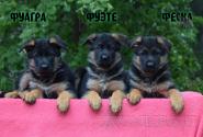 16_Puppies_Mac_Yuventa_FUAGRA_FUETE_FESKA