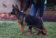 26_Puppies_Mac_Yuventa_FARIN