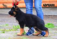 11_Puppies_Ekaraj_Yunita_ADRIANO