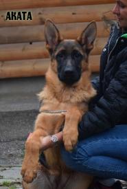 27_Puppies_Ekaraj_Yunita_AKATA