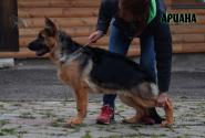 31_Puppies_Ekaraj_Yunita_ARIANA