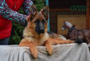 33_Puppies_Ekaraj_Yunita_ARIANA