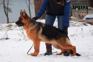 36_Puppies_Ekaraj_Yunita_ARIANA