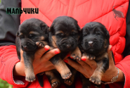 01_Puppies_Napoli_Barselona_Boys