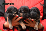 02_Puppies_Napoli_Barselona_Boys