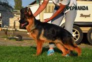 02_Puppies_Uragan_Kajsa_FERNANDA