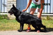 40_Puppies_Uragan_Etheri_UMARA