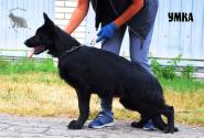 44_Puppies_Uragan_Etheri_UMKA