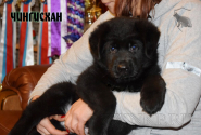 07_Puppies_Uragan_BFortuna_CHINGISKHAN_Black