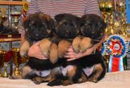 05_Puppies_Umaro_Yuksa_UMARIKI