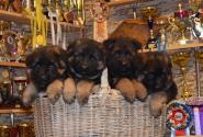 06_Puppies_Umaro_Yuksa_UMARIKI