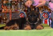 14_Puppies_Umaro_Yuksa_TAGIRA