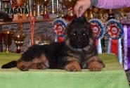 18_Puppies_Umaro_Yuksa_TABATA