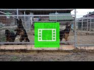 "Super video from the German Shepherd Breeding Kennel ""Team Zilber Wasserfall"""
