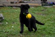 02_Puppies_Uragan_Fleshka_VOLKANA