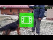 Team Zilber Wasserfall SHERLI and SHIKLI / LH /