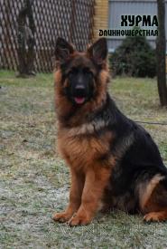 28_Puppies_Ekaraj_Bakara_HURMA_LH