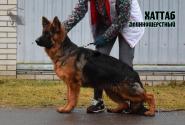 30_Puppies_Ekaraj_Bakara_HATTAB_LH