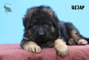 05_Puppies_Garry_Roxana_CEZAR_LH