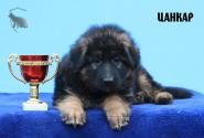 06_Puppies_Garry_Roxana_CANKAR_LH