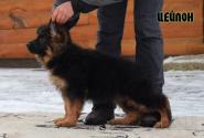 09_Puppies_Garry_Roxana_CEJLON_LH