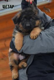 10_Puppies_Garry_Roxana_CEZAR_LH