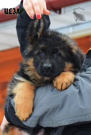 11_Puppies_Garry_Roxana_CEZAR_LH