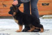 12_Puppies_Garry_Roxana_CEZAR_LH