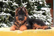 16_Puppies_Garry_Roxana_COJ_LH