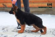 17_Puppies_Garry_Roxana_COJ_LH