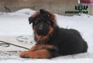 18_Puppies_Garry_Roxana_CEZAR_LH