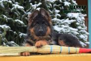 20_Puppies_Garry_Roxana_CANKAR_LH