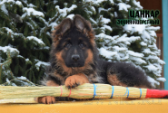 20_Puppies_Garry_Roxana_CANKAR_LH
