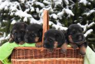 01_Puppies_Bacho_Yosha