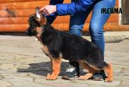 17_Puppies_Ekaraj_Zeyna_ZHEJMA