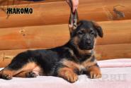 22_Puppies_Ekaraj_Zeyna_ZHAKOMO