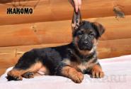 23_Puppies_Ekaraj_Zeyna_ZHAKOMO