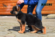 24_Puppies_Ekaraj_Zeyna_ZHAKOMO