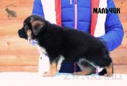 17_Puppies_Bacio_Bakkara_BOY