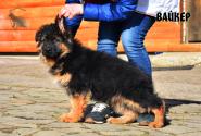 23_Puppies_Bacio_Bakkara_VAJKER