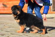 25_Puppies_Bacio_Bakkara_VAJKER