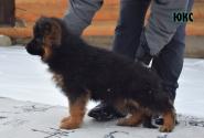 08_Puppies_Yamaguchi_Shtuchka_YURMAX_LH