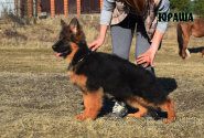 11_Puppies_Yamaguchi_Shtuchka_YURASHA_LH