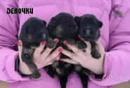 02_Puppies_Umaro_Chernika_GIRLS