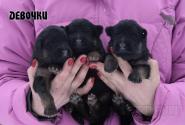 03_Puppies_Umaro_Chernika_GIRLS