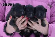 04_Puppies_Umaro_Chernika_GIRLS